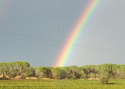 Rainbow over the vineyards of the Pierrefont estate (Gignac-34)
