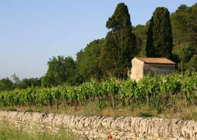 Vines in the South of France