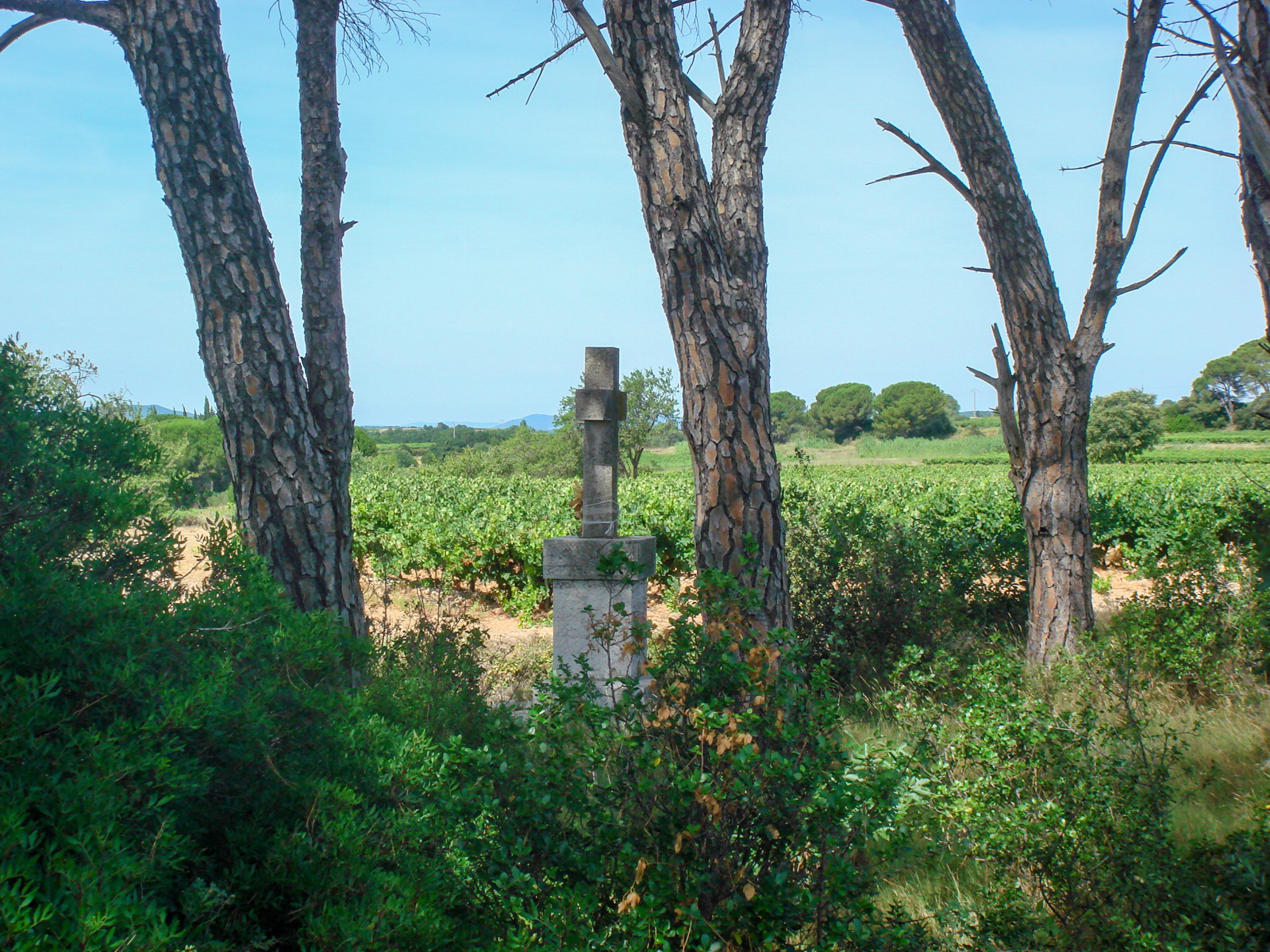 Cross in the vineyards of the domain of Pierrefont - hérault