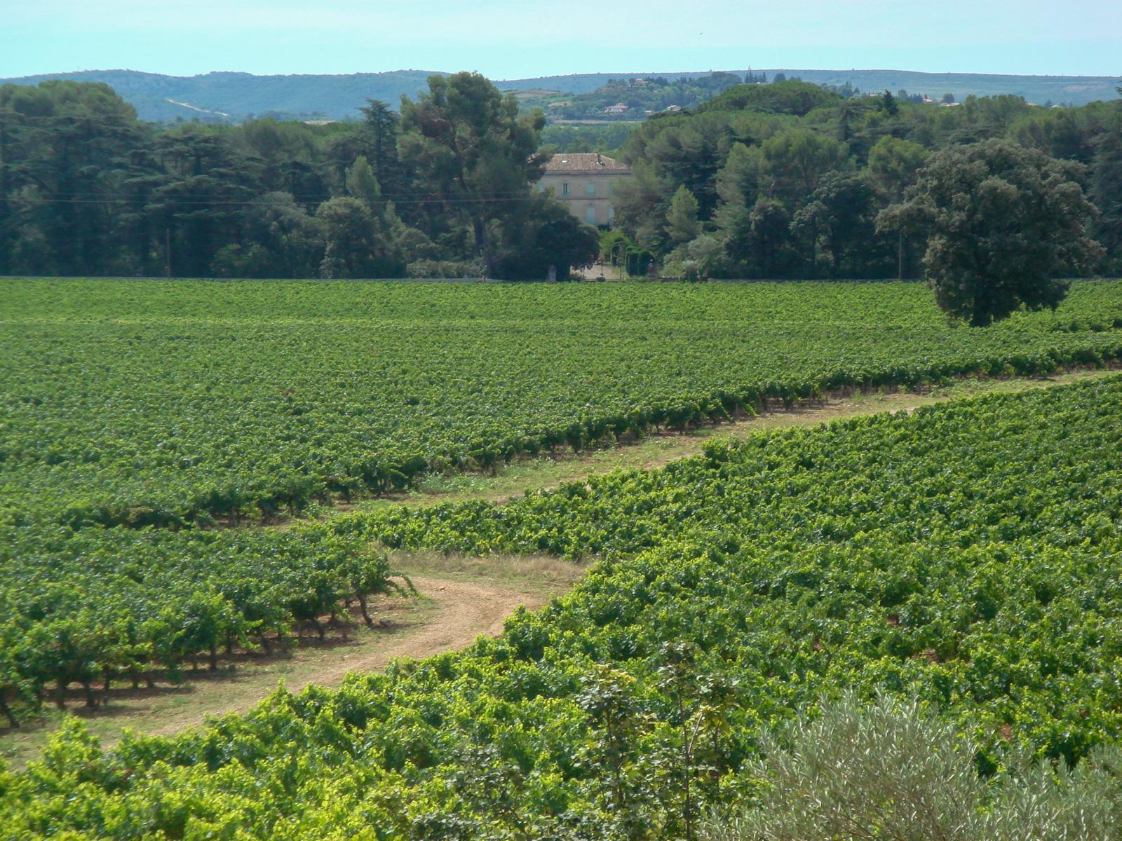 Pierrefont vineyard near Gignac - Hérault
