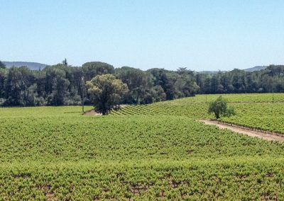 Languedoc IGP Oc vineyard in Lagamas (34)